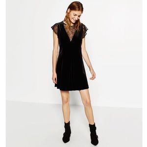 Zara Basic Collection Velvet Lace Black Dress